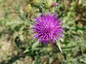 Dealing with noxious weeds